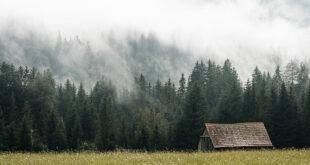 Old Barn Near The Forest Hidden in The Fog