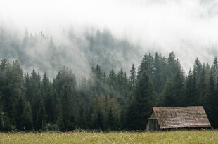 Old Barn Near The Forest Hidden in The Fog